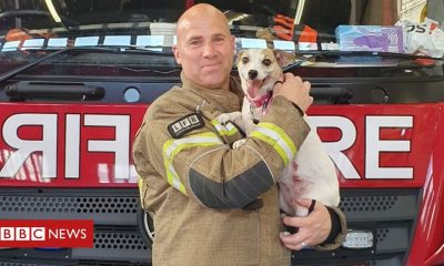 Firefighter fosters Jack Russell dog he saved from flames